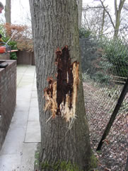 Tree work, Tree felling and Tree removal
